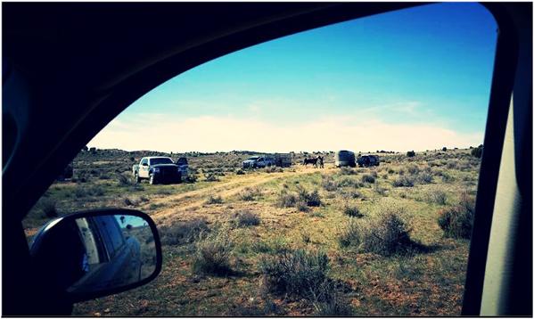 cattleimpoundmentBigM7-4-2016